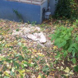 Photo Of Solomon Tree Service   Ottawa, ON, Canada. Leaving Very Low Stump