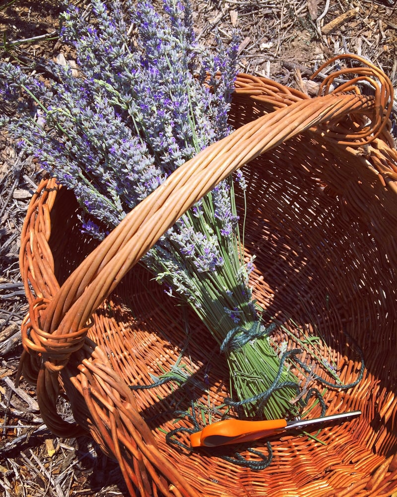 Frog Creek Lavender Farm: 10924 Ojai-Santa Paula Rd, Ojai, CA