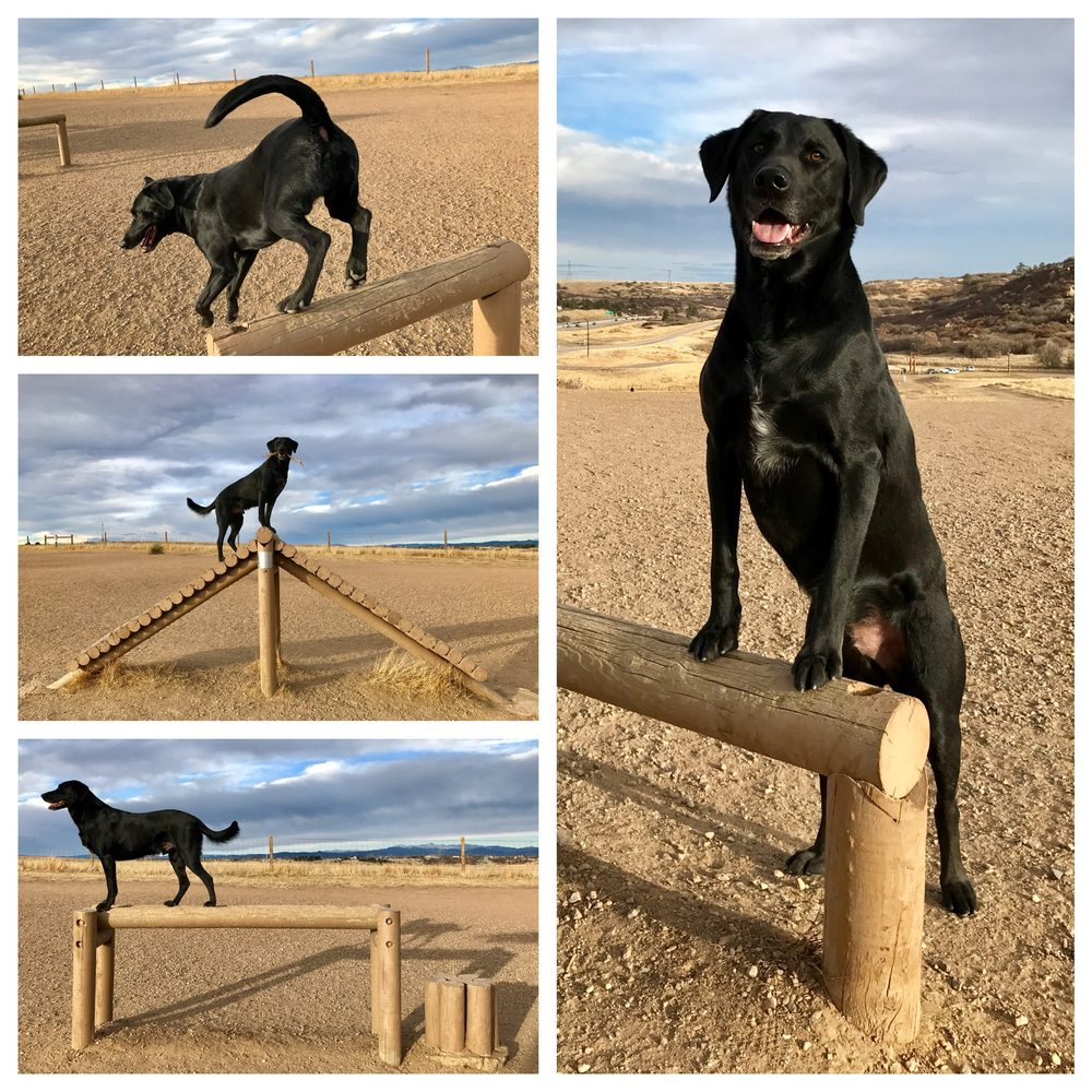 Triumphant Canine Dog Training: 5759 S Nepal Ct, Centennial, CO