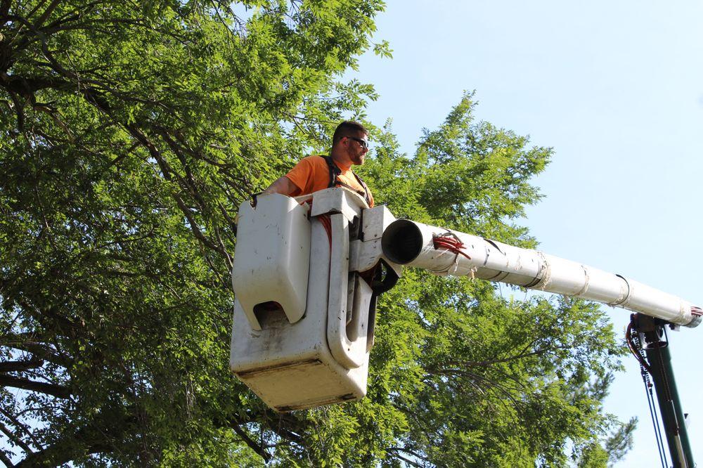 Total  Tree Service: 632 W Cleary St, Pontiac, IL
