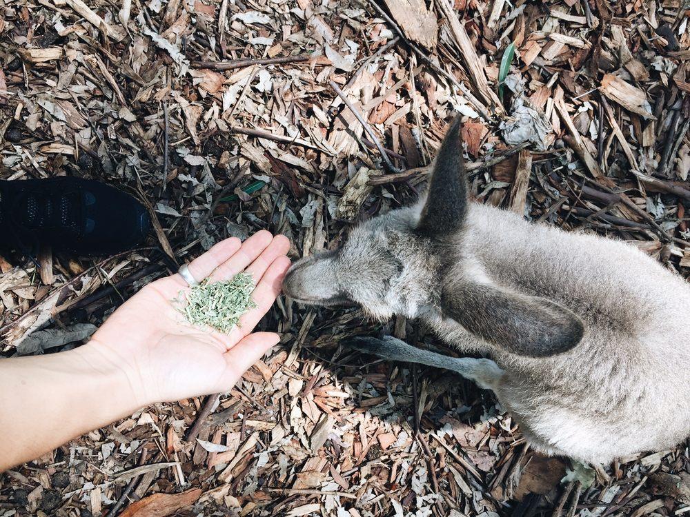 Koala Park Sanctuary