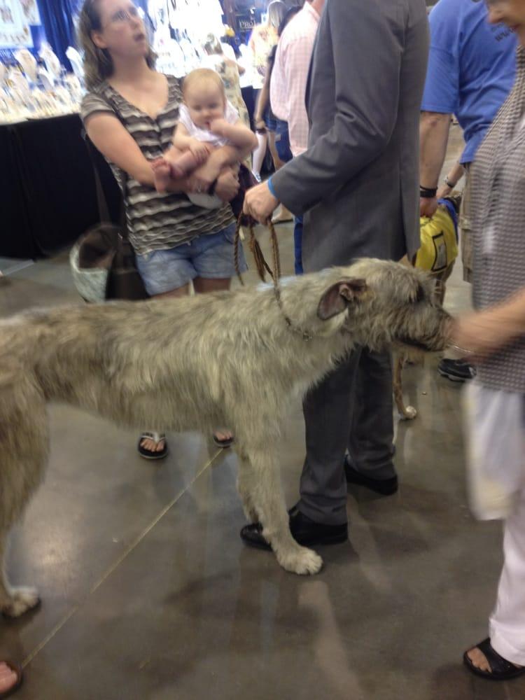 Irish Wolfhound } { - ...