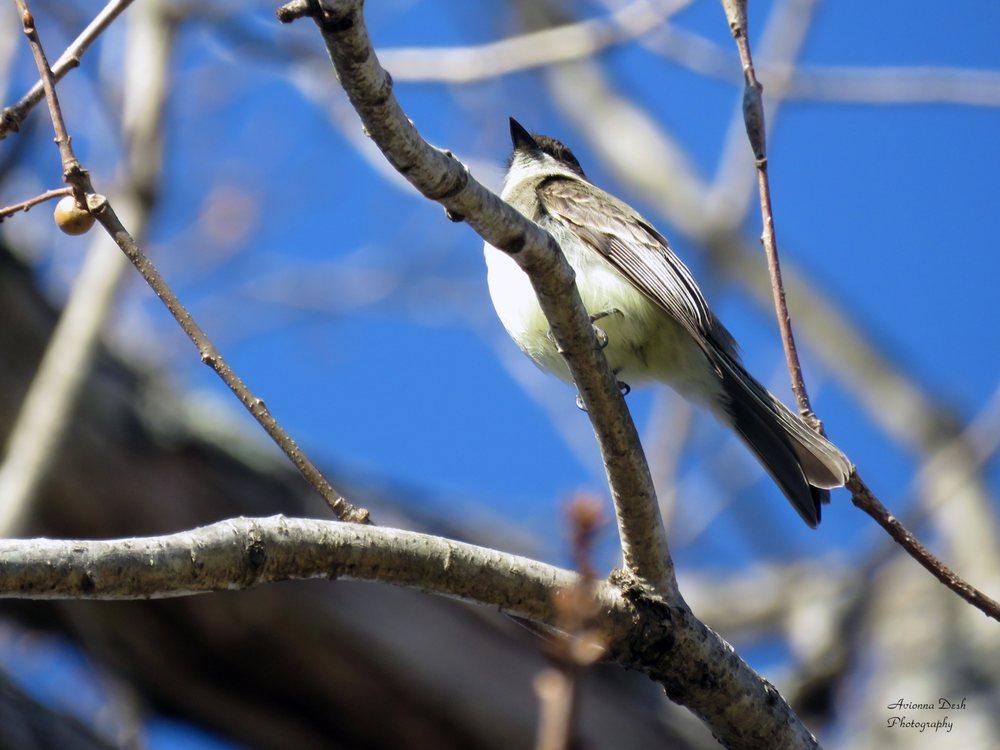 Merkle Wildlife Sanctuary & Visitor Center: 11704 Fenno Rd, Upper Marlboro, MD