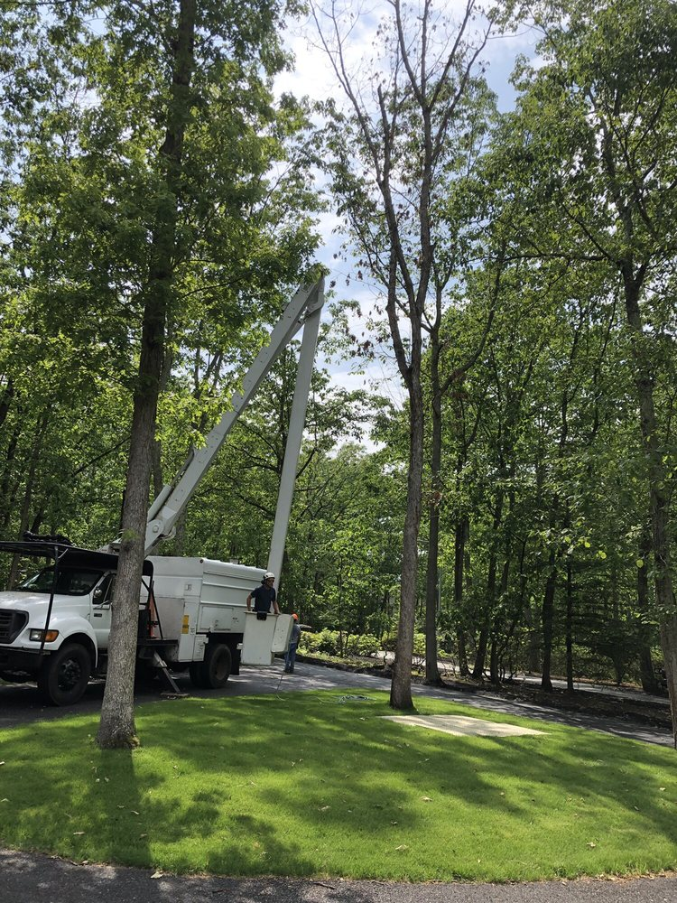 Cornerstone Tree Service: 265 Medford Mount Holly Rd, Medford, NJ