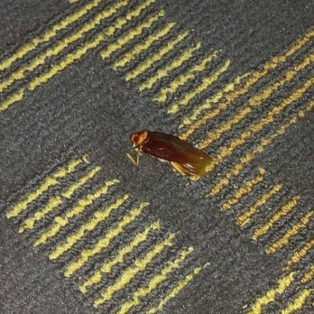 Photo Of Hotel Point Loma San Go Ca United States Roach That