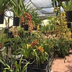 Photo Of T Orchids San Jose Ca United States Open