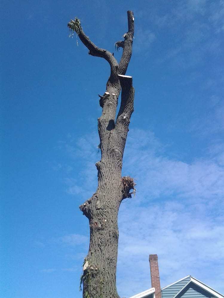 Island Tree Service: 3 Vantine Ave, Alburgh, VT