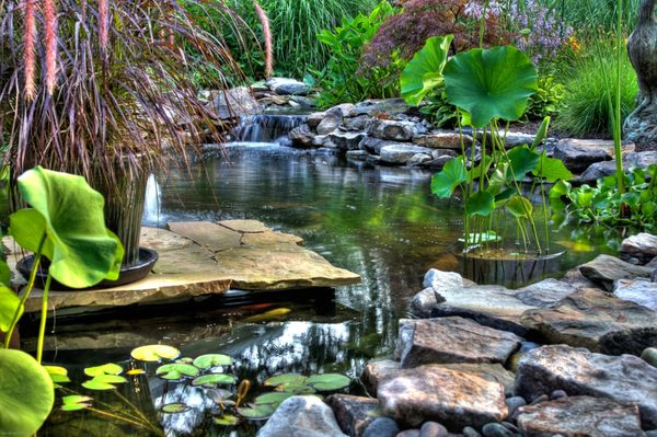 Napa Valley Ponds and Water Features