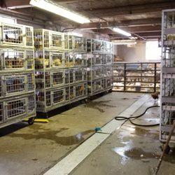 Saba Live Poultry Meat Shops 52 Granby St Blue Hills
