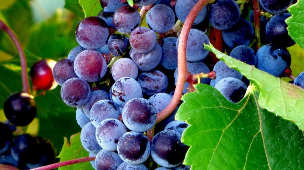 Wagonhouse Winery: 1401 State Hwy 45, Swedesboro, NJ