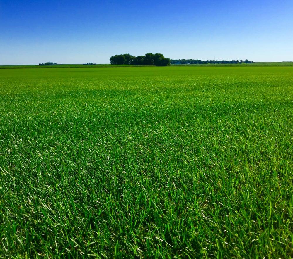Blue Grass Enterprises: 3965 C Ave Ext, Alburnett, IA