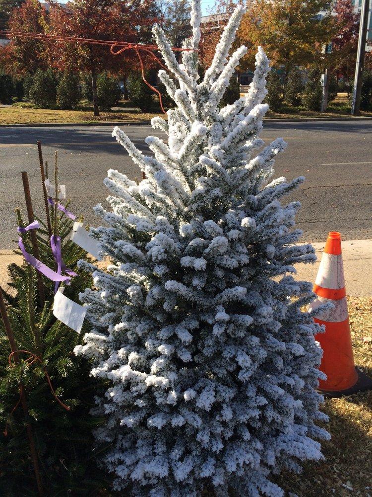 Willie Simpson's Christmas Tree Lot