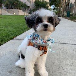 Escondido Pets - 76 Photos & 80 Reviews - Pet Adoption - 200 E Via