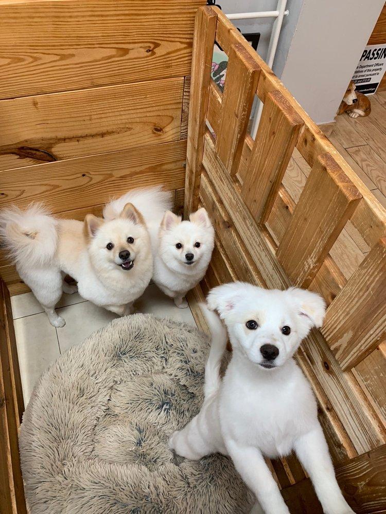 La Vie Pet Salon & Day Care
