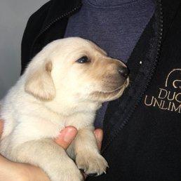 SoDak Labradors & Gundog Kennels - 17 Photos - Pet Training