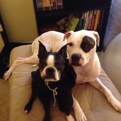 dog behaviorist san diego