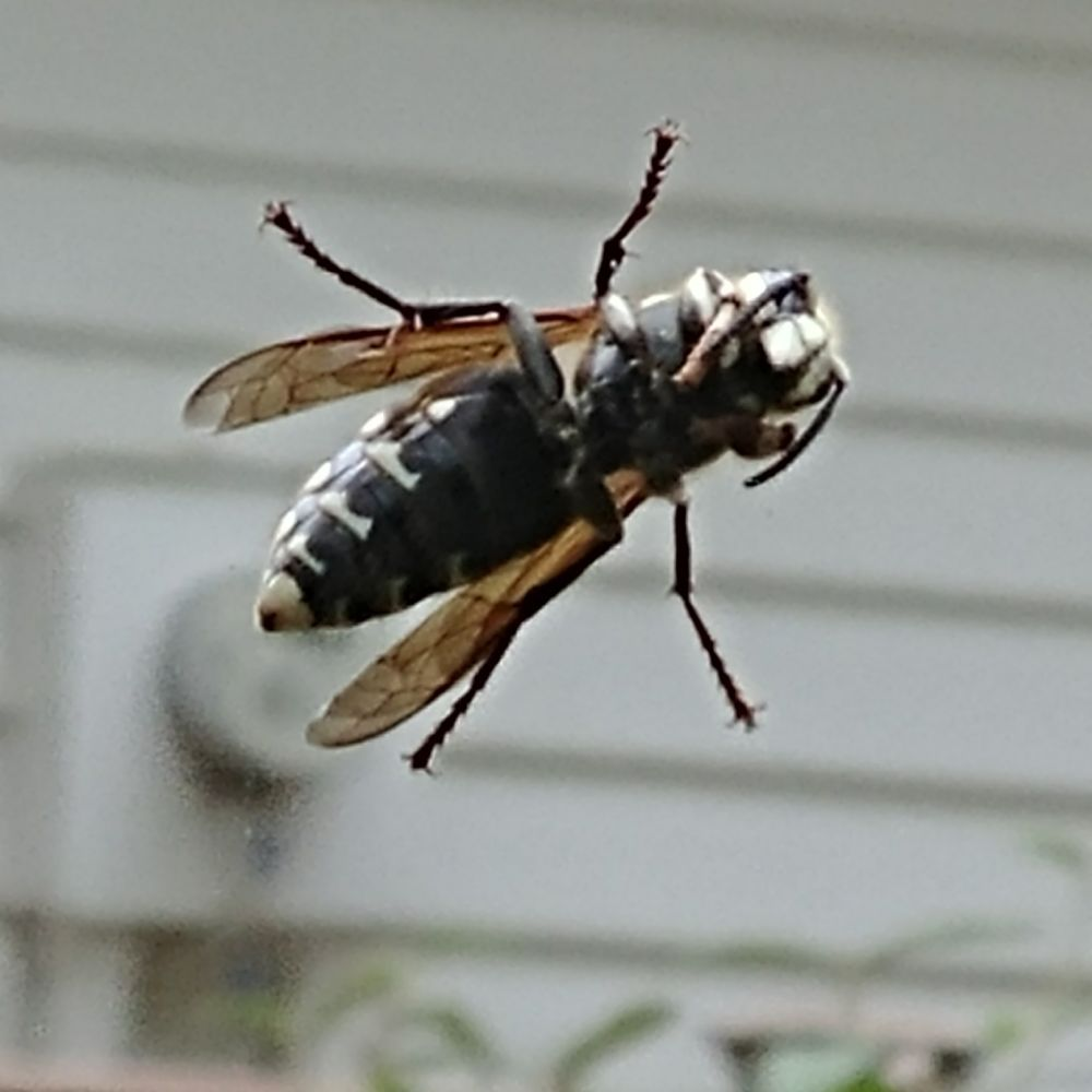 Better Pest Control: Milford, OH