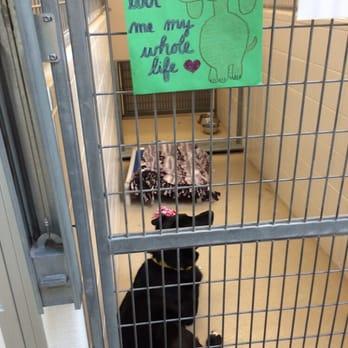 Omaha Nebraska Humane Society Cats