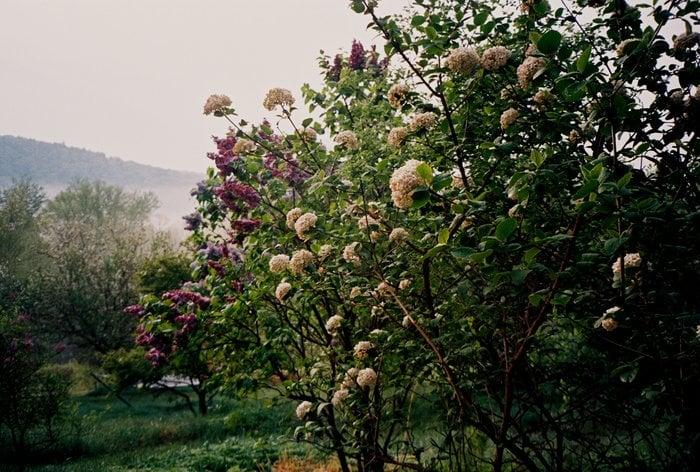 Flower Hill Farm 24 Photos Guest Houses Hemenway Rd