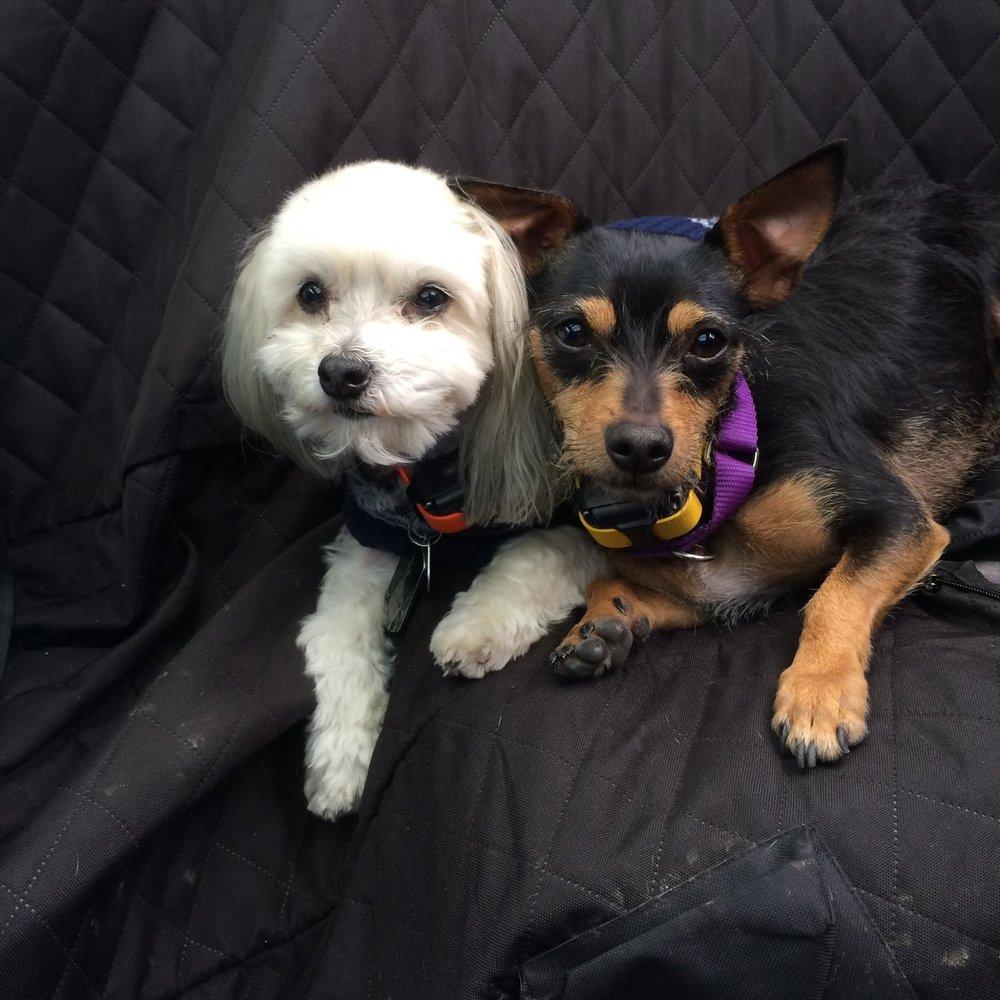 HOPE Dog Training: Lubbock, TX
