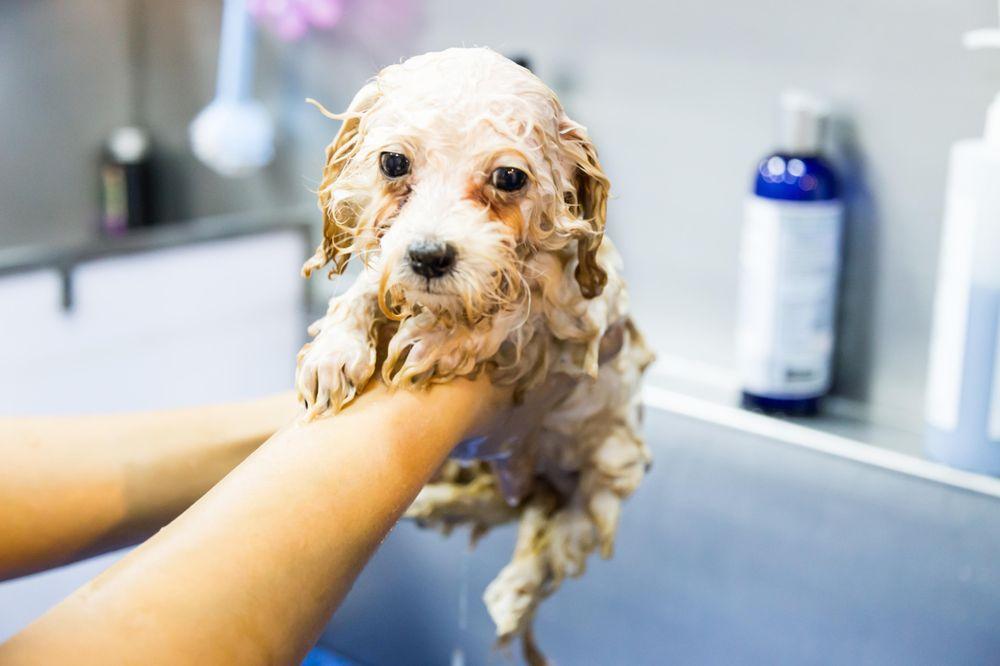 Reunion Pet Grooming Services: 7940 Lake Wilson Rd, Davenport, FL