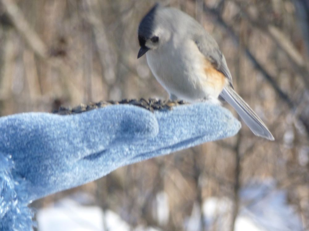 Social Spots from Ipswich River Wildlife Sanctuary