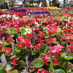 Photo Of Grayu0027s Garden Center   Eugene, OR, United States. Lots Of Flower