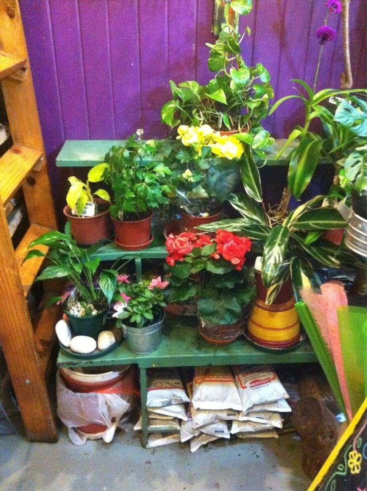 Las acacias viveros y jardiner a paraguay 5388 for Viveros en paraguay