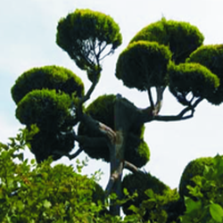 Custom Tree Trimming Design - Tree Services - 759 San