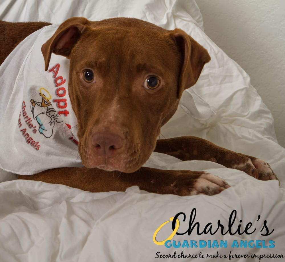 Charlie S Guardian Angels Dog Rescue