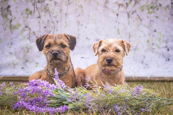 Affordable Dog Training - Pet Training - West Ashley