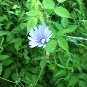 Eloise Butler Wildflower Garden And Bird Sanctuary 21 Photos 14 Reviews Hiking Near