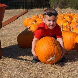 johnsons pumpkin patch eugene or