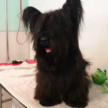 Dirty dog grooming and pet boutique 27 reviews pet groomers photo of dirty dog grooming and pet boutique broomfield co united states solutioingenieria Image collections