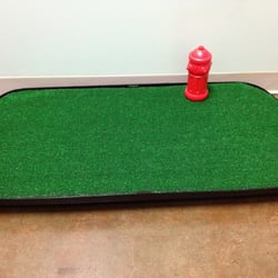 Go-Doggy-Go Indoor Dog Potty, LLC - Pet Training - 420 S San Pedro ...
