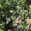 Anderson Blues: 8793 NW Arboretum Rd, Corvallis, OR