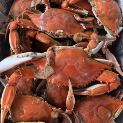 f0f9bd5d5 THE BEST 10 Seafood Markets in Norfolk
