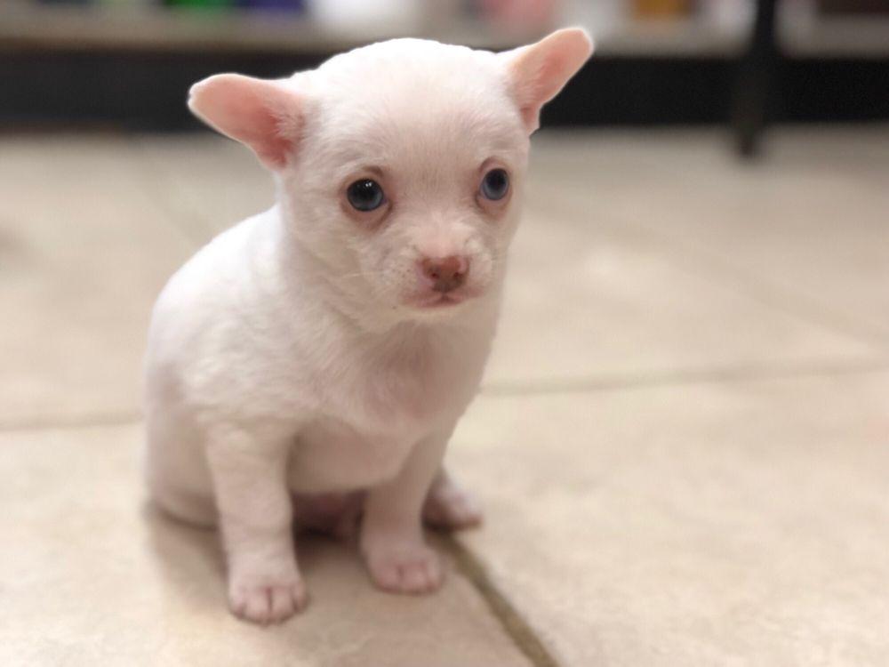 Spot's Spot Pet Grooming