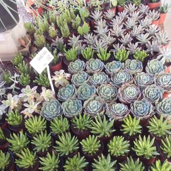 Vivero mario 28 fotos viveros y jardiner a av ra l for Plantas precios viveros