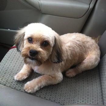 Ollu dog wash grooming salon 15 photos 19 reviews pet photo of ollu dog wash grooming salon minneapolis mn united states solutioingenieria Images
