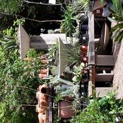 Succulents Photo Of Waltonu0027s Lawn U0026 Garden Center   Dallas, TX, ...
