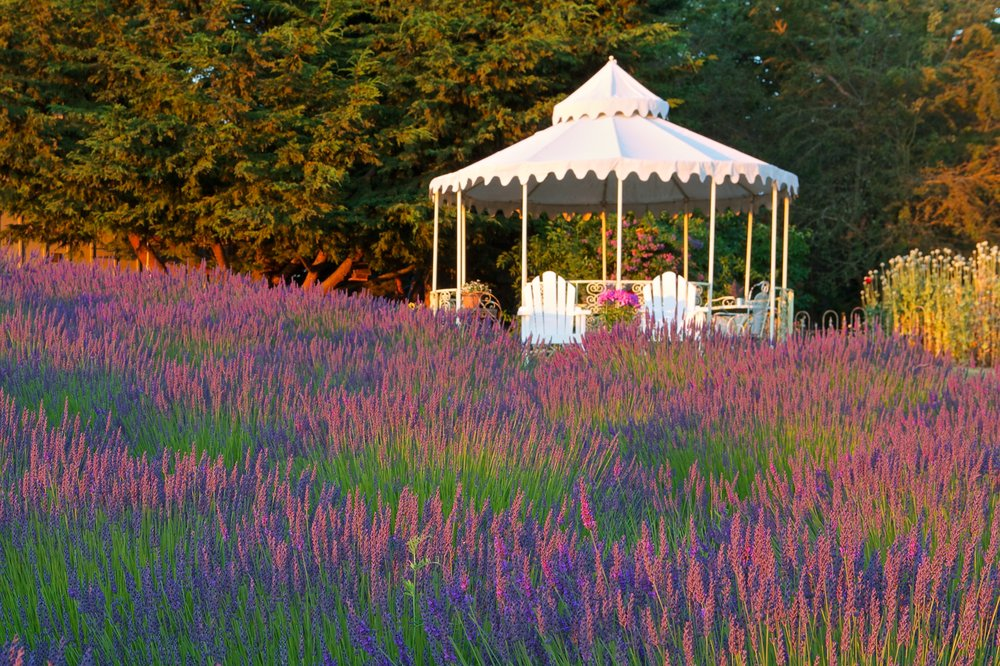 Jardin Du Soleil Lavender: 3932 Sequim Dungeness Way, Sequim, WA