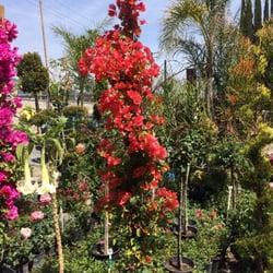 Photo Of Gonzalez Nursery Monrovia Ca United States