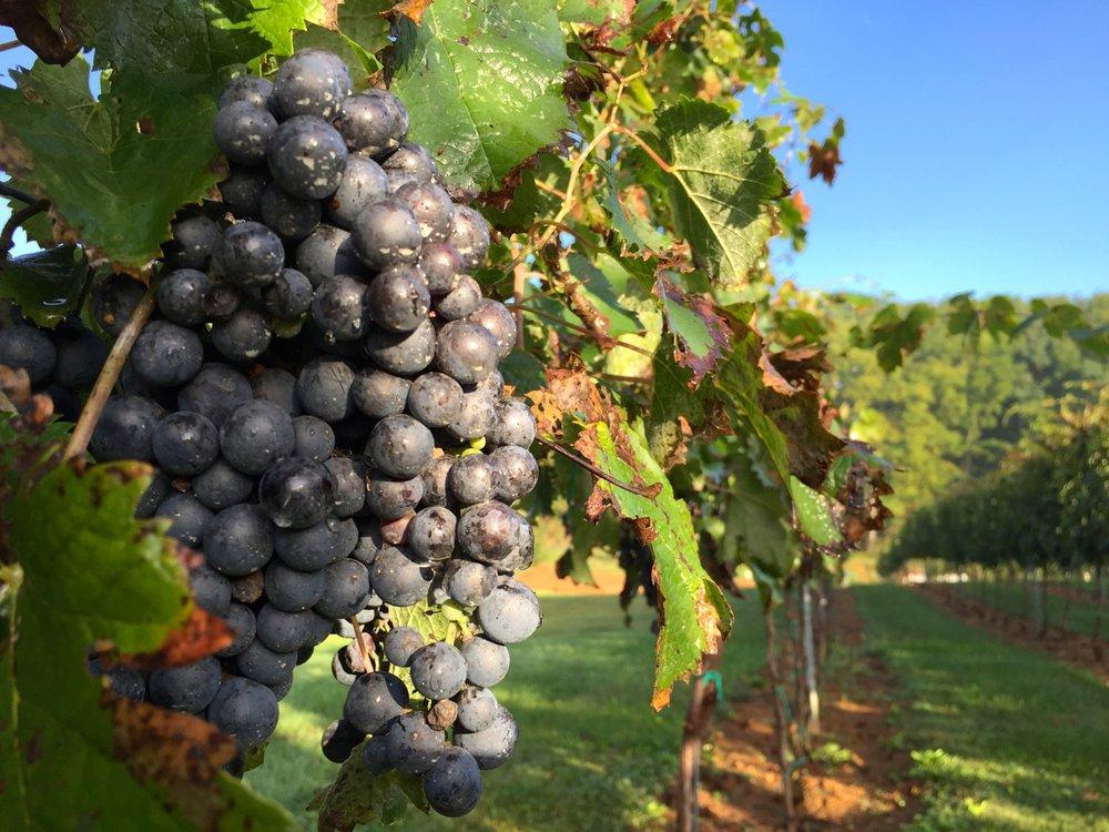 Social Spots from Royal Oaks Vineyard & Winery
