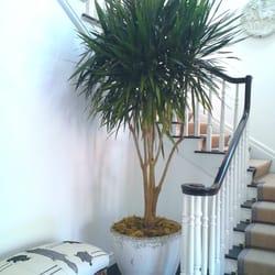 Photo Of Botanika Interior Plantscapes   San Diego, CA, United States.  Classic Style