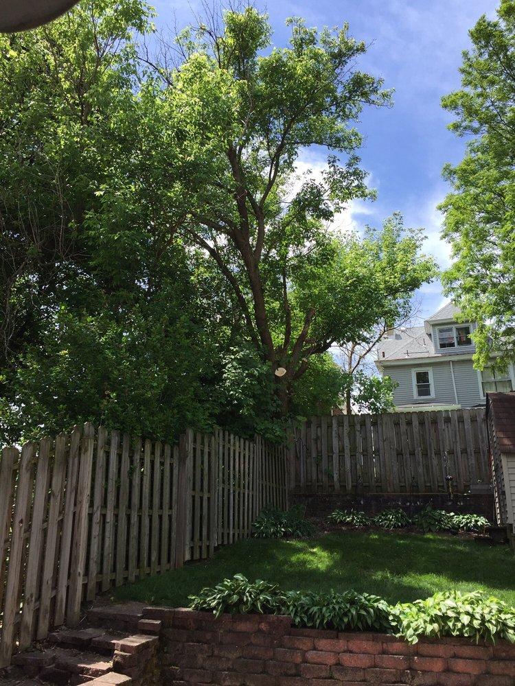 Hellmann's Tree Service