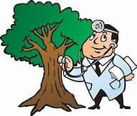 Doctor Trees & Landscape Specialist: New Palestine, IN