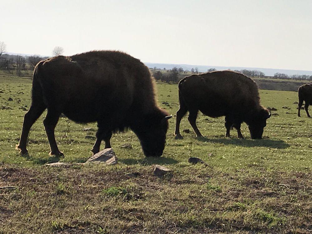 Tallgrass Prairie Preserve: 15316 Co Rd 4201, Pawhuska, OK