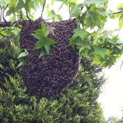 apiculteur seine maritime