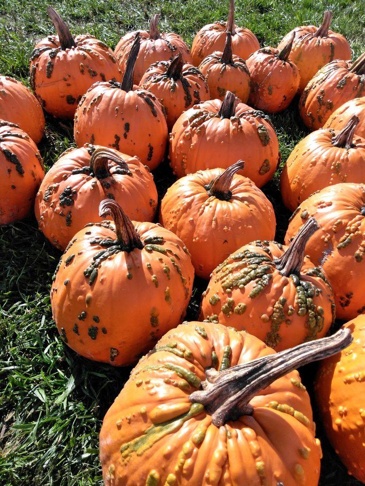 Picha Berry Farm and Pumpkin Patch